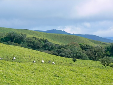 pasture-lands