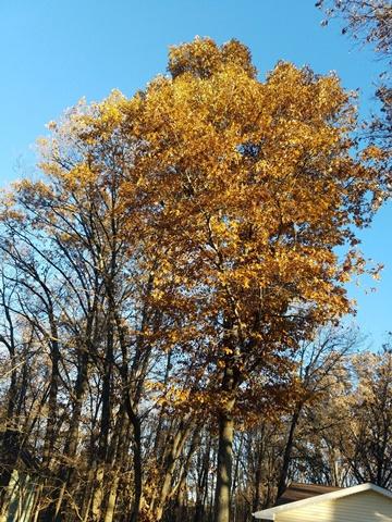 Daytime leaves