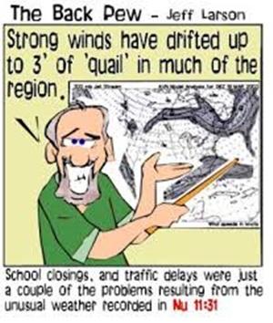 quail humor